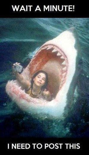 The 20 Funniest Moments In Shark History (GALLERY