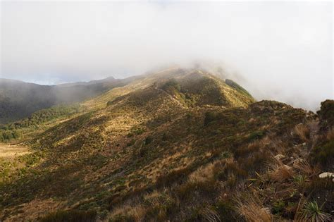 New Zealand Paparoa track: essential hiking tips for new