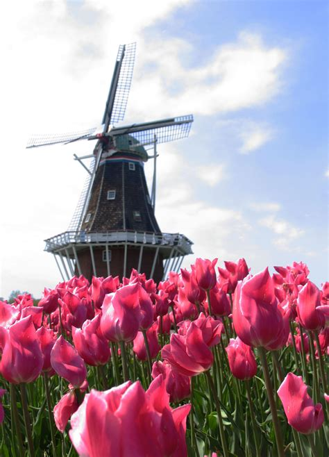 Early Blooms Mean Two Times The Fun In Tulip Town | Great