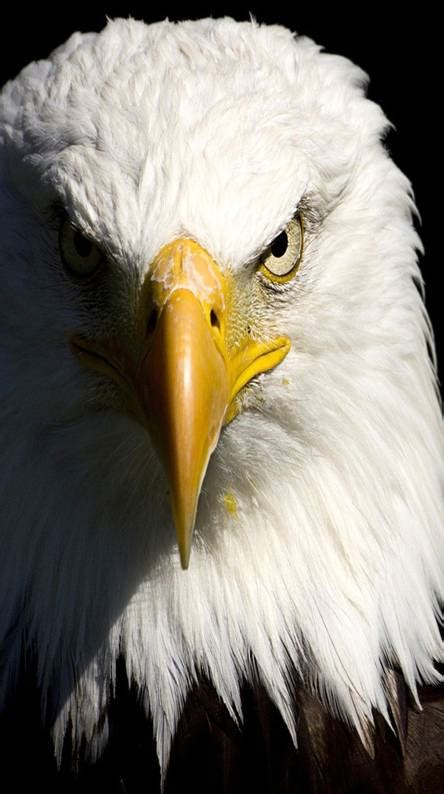 Eagle Ringtones and Wallpapers - Free by ZEDGE™