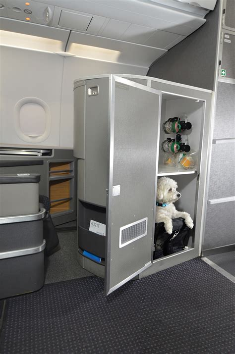 You're not the only one who can fly first class; now your